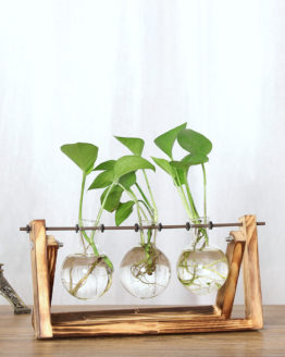 Vases Transparent plante hydroponic fleur plant flower ceramicvase design homedecor homedesign artdeco hightech art decoration musthave best tendance 2018 pharaonink